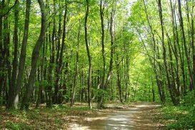 Wald-273x182.jpg